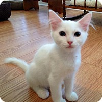 Adopt A Pet :: Pearl - Olive Branch, MS