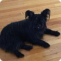 Adopt A Pet :: Skye - Cary, NC