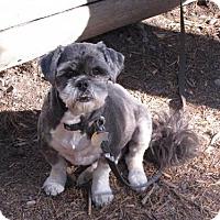 Adopt A Pet :: Max - Logan, UT