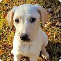 Adopt A Pet :: Nantucket - Brownsboro, AL