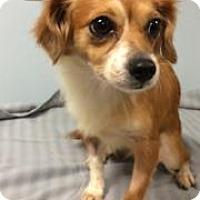 Adopt A Pet :: Emma - Weston, FL