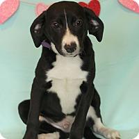 Adopt A Pet :: Glen - Waldorf, MD