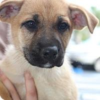 Adopt A Pet :: Betty - Royal Palm Beach, FL