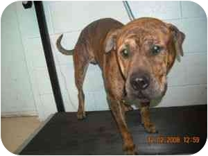 Hound (Unknown Type)/Shar Pei Mix Dog for adoption in Emory, Texas - Clyde