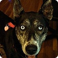 Adopt A Pet :: Trixxie - Elkhart, IN