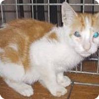 Adopt A Pet :: Dandelion - Miami, FL