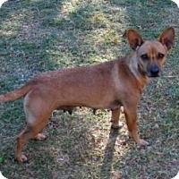 Adopt A Pet :: Buttons - Plano, TX