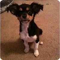 Adopt A Pet :: Tula - Arlington, TX