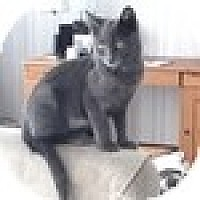 Adopt A Pet :: Lorca - Vancouver, BC