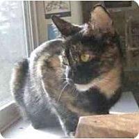 Adopt A Pet :: Penny (*video*) - Portland, OR