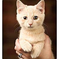 Adopt A Pet :: Tammy - Owensboro, KY
