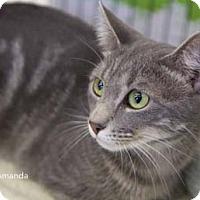 Adopt A Pet :: Amanda - Merrifield, VA