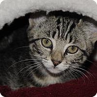 Adopt A Pet :: Carter3