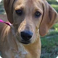 Adopt A Pet :: Karma - Waldorf, MD