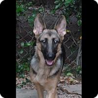 Adopt A Pet :: Sabra - Houston, TX