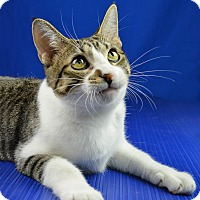 Adopt A Pet :: Molly - Carencro, LA