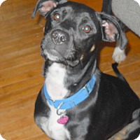 Adopt A Pet :: Maggie - 2 - Pardeeville, WI