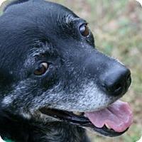 Adopt A Pet :: Phylis - Lufkin, TX