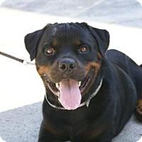 Adopt A Pet :: Chevy - Loxahatchee, FL