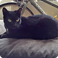 Adopt A Pet :: Elektra - Elmwood Park, NJ