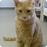 Adopt A Pet :: Sunshine - Hamburg, NY