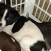 Adopt A Pet :: Lenny - Tampa, FL
