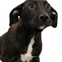 Adopt A Pet :: McGee - Glastonbury, CT