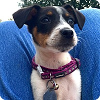 Adopt A Pet :: Chipper - Prole, IA