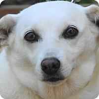 Adopt A Pet :: Gina - St Louis, MO