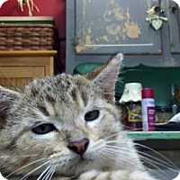 Adopt A Pet :: Kiko - Portland, IN