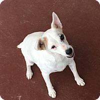 Adopt A Pet :: Daisy in San Antonio - Austin, TX