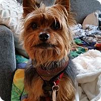 Adopt A Pet :: Charlie - Ottawa, ON