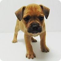 Adopt A Pet :: Kurt - Denver, CO