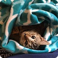 Adopt A Pet :: Caroline - Parkton, NC