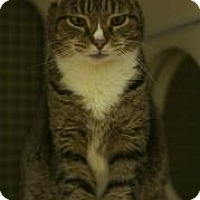 Adopt A Pet :: Tabitha - New York, NY