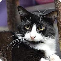 Adopt A Pet :: Zan 131057 - Atlanta, GA
