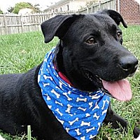 Adopt A Pet :: Mellow - Lewisville, IN