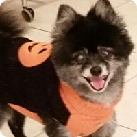 Adopt A Pet :: Gidget - Weeki Wachee, FL
