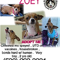 Adopt A Pet :: Zoey - Grass Valley, CA