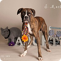 Adopt A Pet :: Macho - Scottsdale, AZ