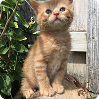 Adopt A Pet :: Spud - Larned, KS