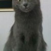 Adopt A Pet :: Sara - Livonia, MI