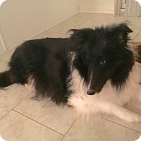 Adopt A Pet :: Darla- Courtesy Post - Alpharetta, GA