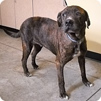 Adopt A Pet :: Baby Boy - Larned, KS