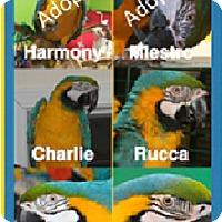 Adopt A Pet :: Ollie, Gizmo & more - Asheville, NC
