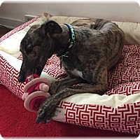 Adopt A Pet :: Vito - Harrisburg, PA
