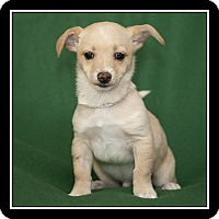 Adopt A Pet :: Howie - San Diego, CA