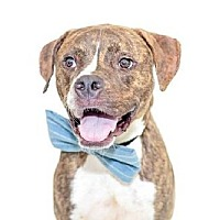 Adopt A Pet :: Tate - Palm City, FL