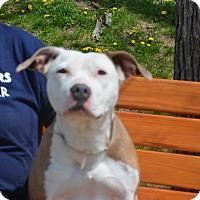 Adopt A Pet :: Priscilla - Yonkers, NY