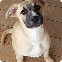 Adopt A Pet :: Kelly - Millersville, MD